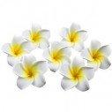 Fleur de frangipanier artificielle (paquet de10)