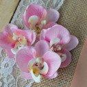 Fleuron d'orchidées rose