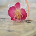 Fleuron d'orchidées fushia